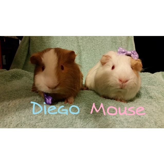 Photo of Mouse And Diego