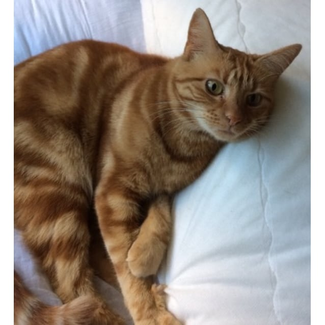 Photo of Poppy ^^Dandy Cat Rescue^^