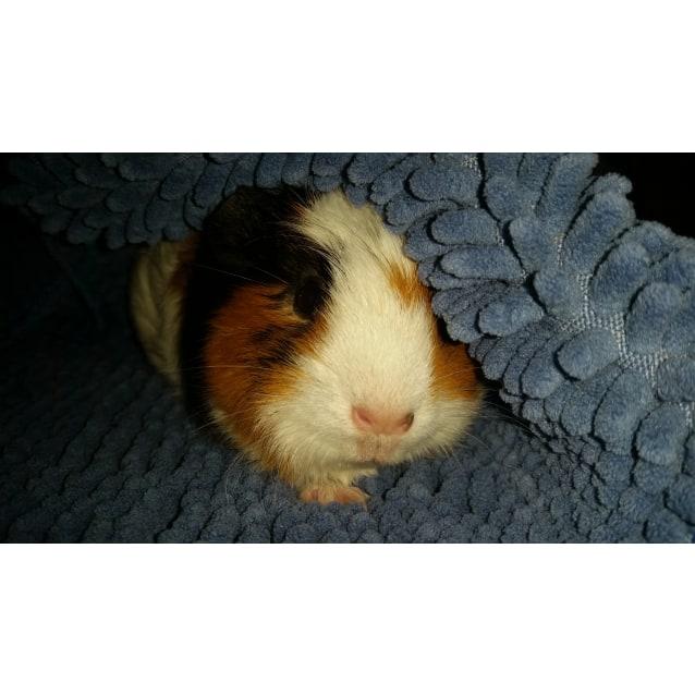 Photo of Loretta