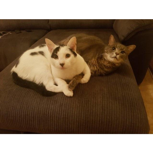 Photo of Jasper & Coco