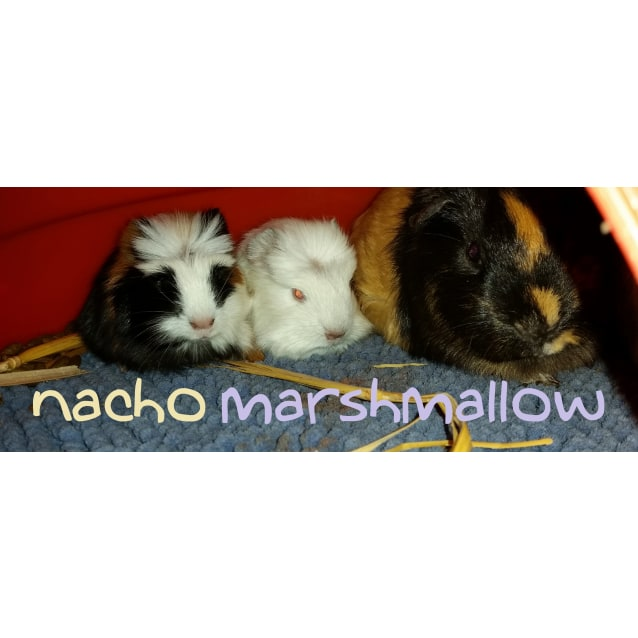 Photo of Nacho And Marshmallow