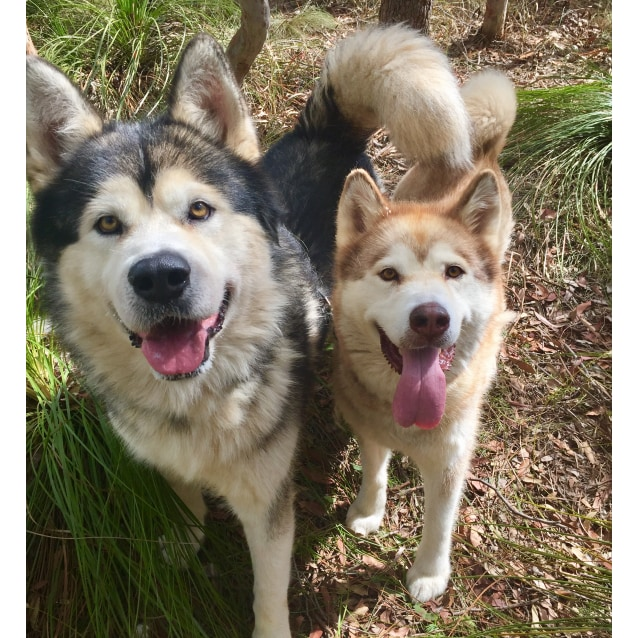 Photo of ❤🐾Nanuk And Narla🐾❤