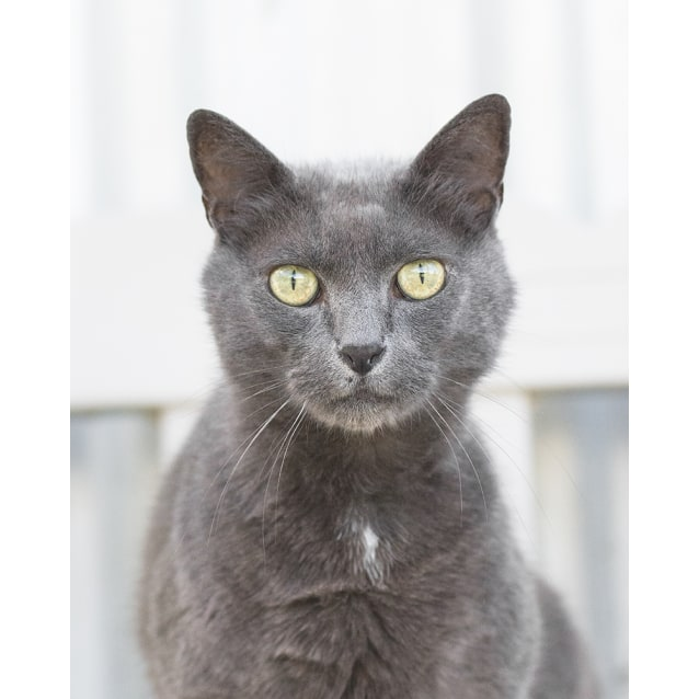 Photo of Puss Puss (84379)