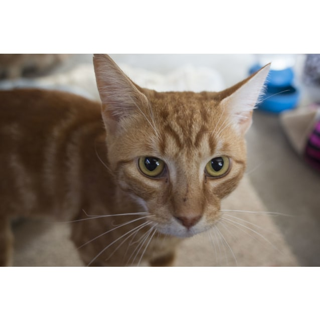 Photo of Turbo The Giggle Cat