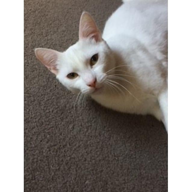 Photo of Pearl The Loyal Loving Mumma Cat!