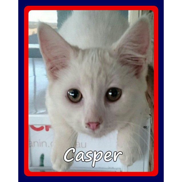Photo of Casper