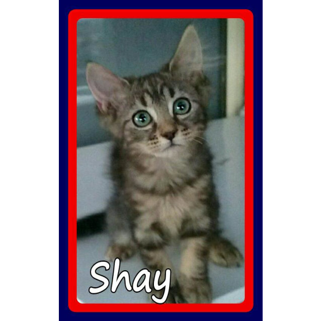 Photo of Shay
