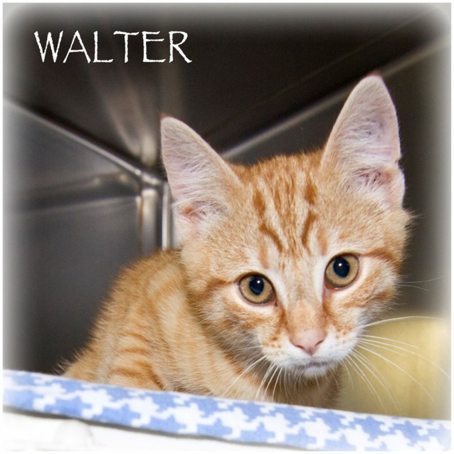 Photo of Walter