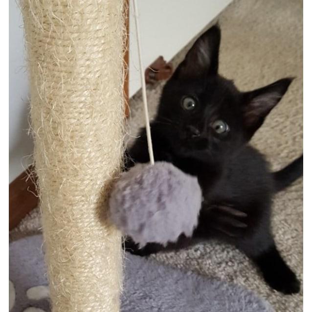 Photo of Buddah ^^Dandy Cat Rescue^^