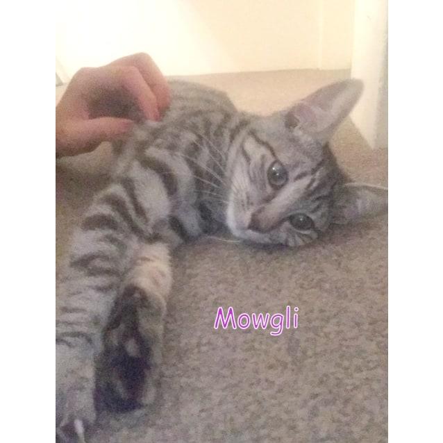 Photo of Mowgli   The Prettiest Boy In Manly!