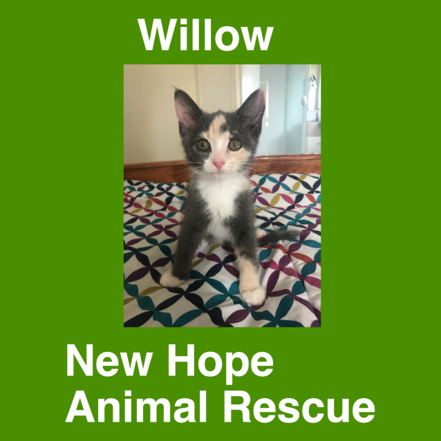 Photo of Willow