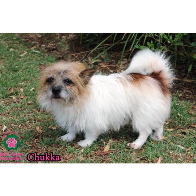 Photo of Chukka