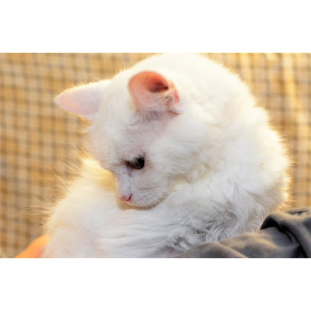 Photo of Snowball