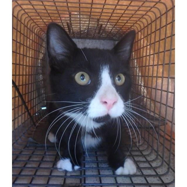 Photo of Sylvester