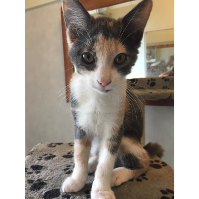 Photo of Shona **2nd Chance Cat Rescue**