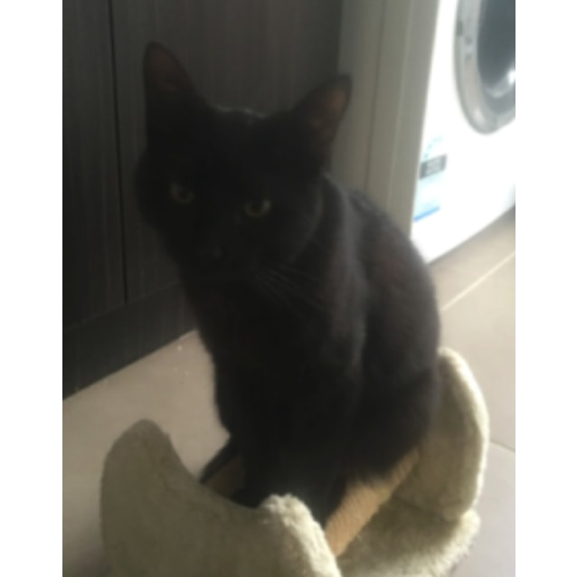 Photo of Poppy The Friendly Little Black Cat!