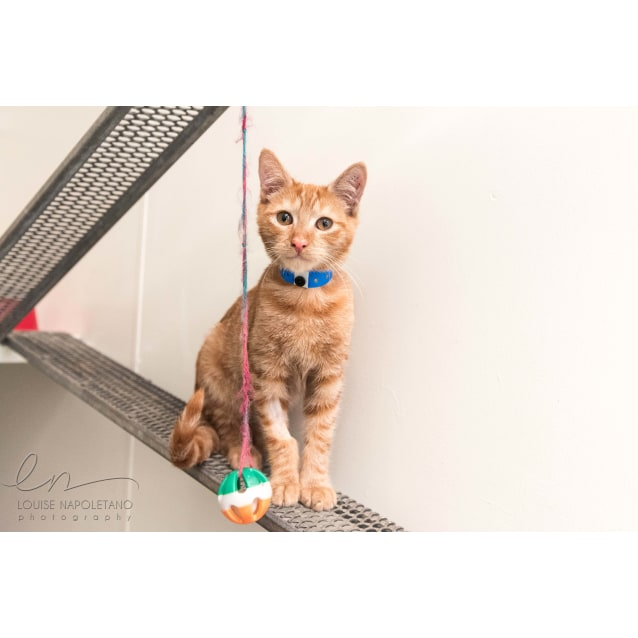 Photo of Gingy (0638)