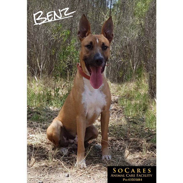 Photo of Benz