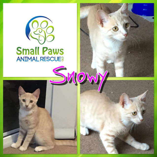 Photo of Snowy