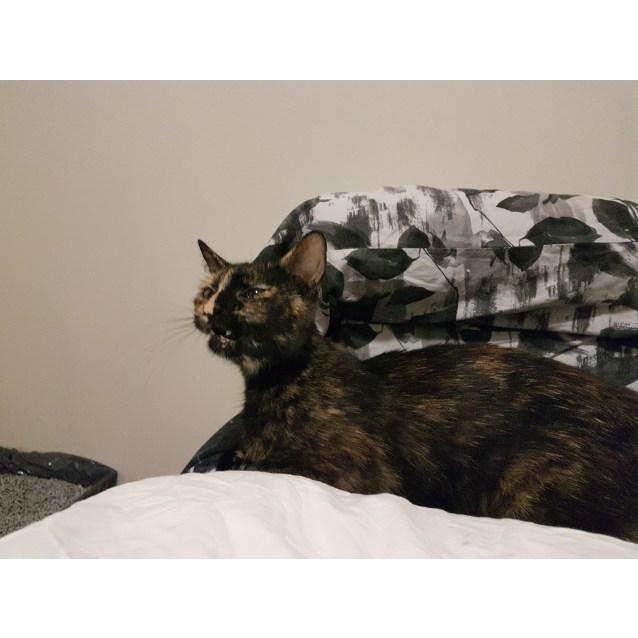 Photo of Cleo (Located In Frankston)