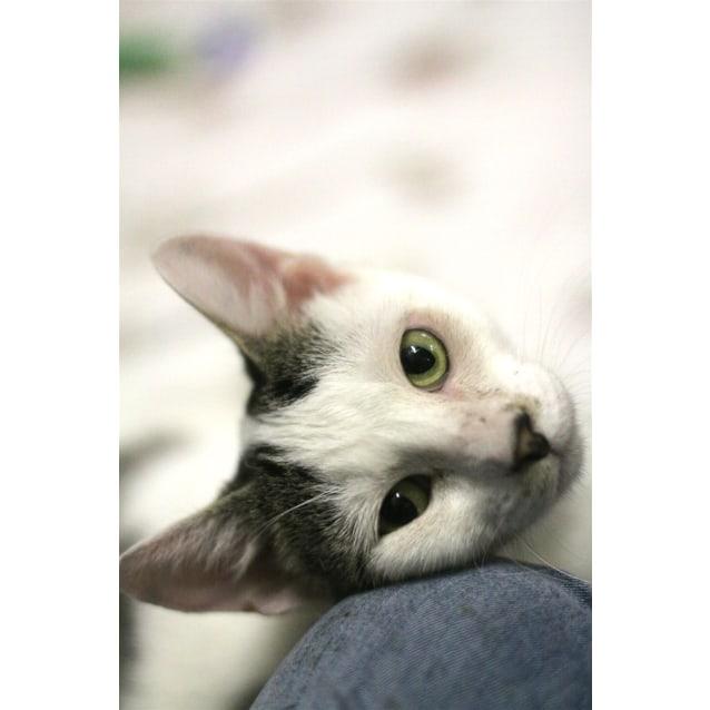 Photo of Skippy