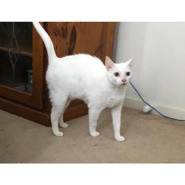 Photo of Winnie The Wonderful White Cat!