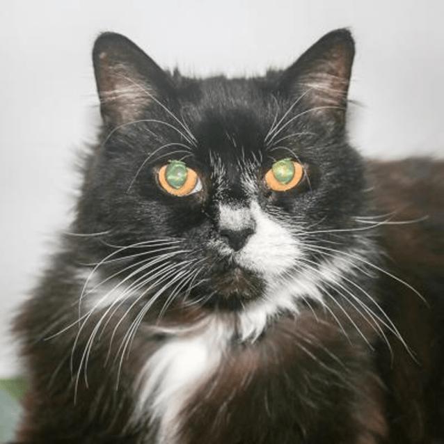 Photo of Puss 887457