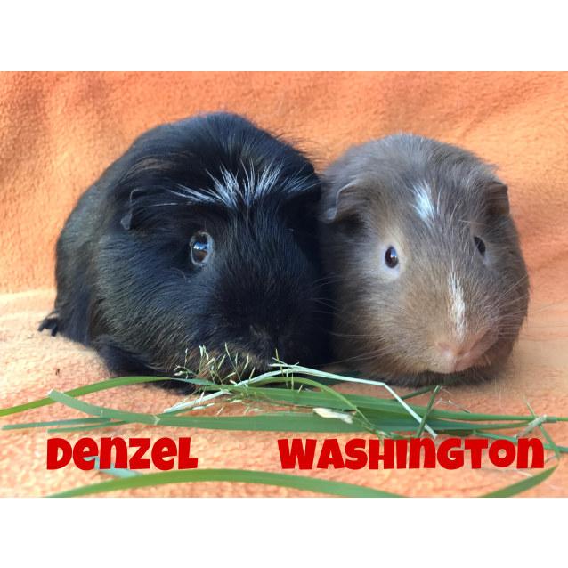 Photo of Denzel & Washington
