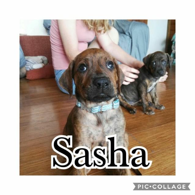Photo of Scarlett And Sasha With Leith