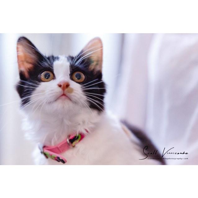 Photo of Clara (Meet Me At Neko Hq   Preston)
