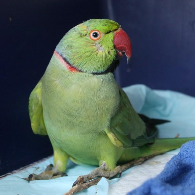 Photo of Captain Birdo