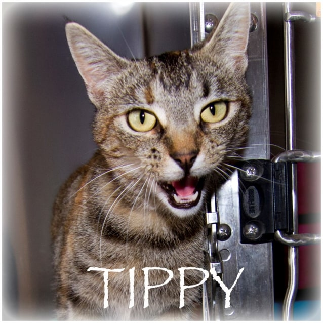 Photo of Tippy