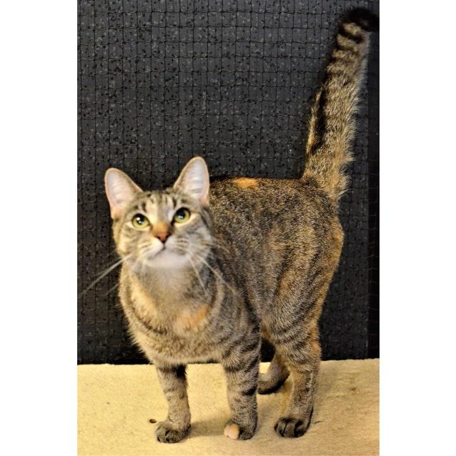 Photo of Meesha