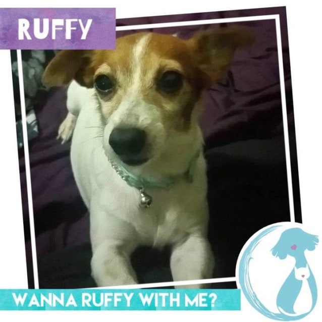Photo of Ruffy
