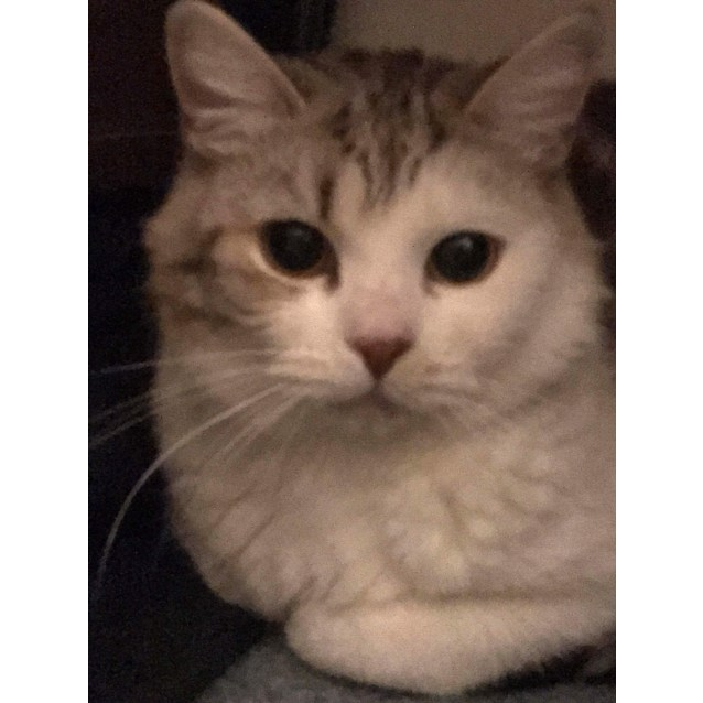 Photo of Munchkin   Located In Brunswick West