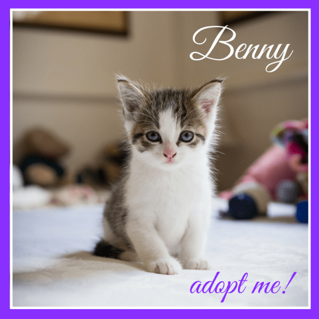 Photo of Benny ~ Kitten (On Trial 10 4 2018)