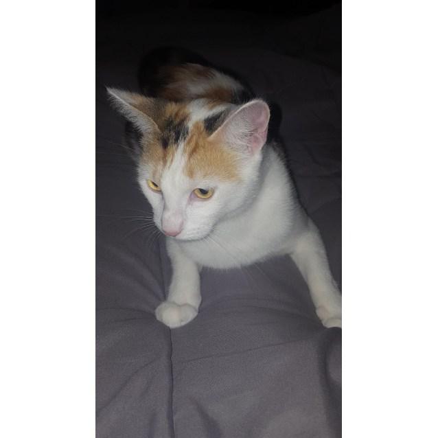 Photo of Dinah