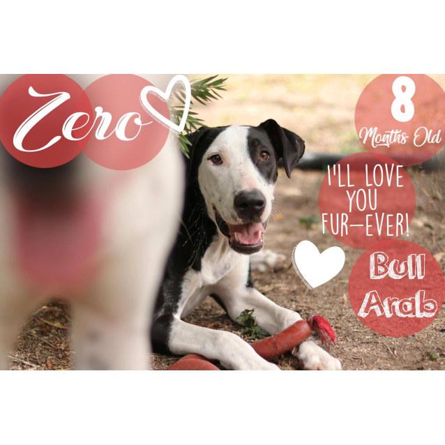 Photo of Zero