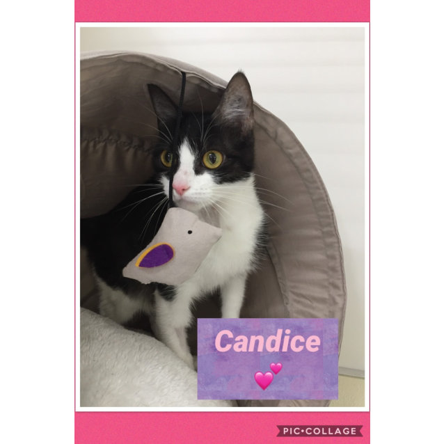 Photo of Candice