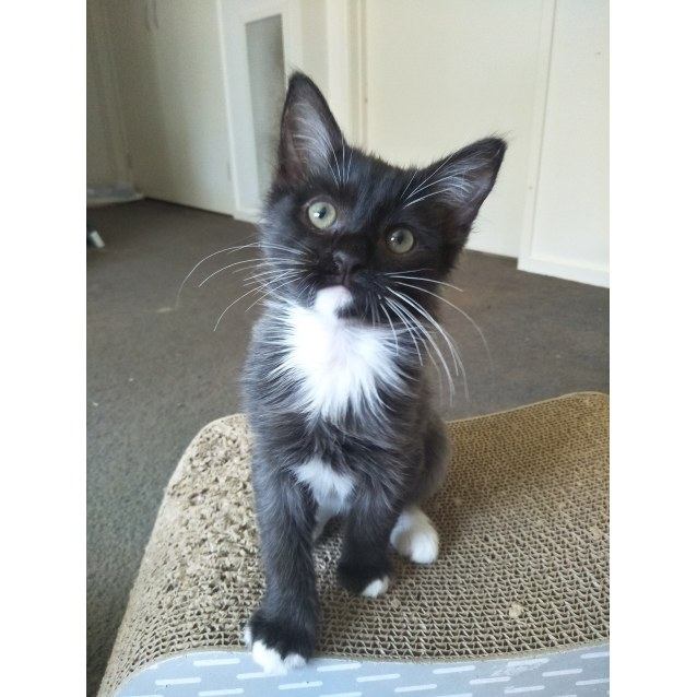 Photo of Muffins (Located In Officer)