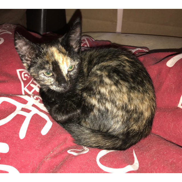 Photo of Dalida **2nd Chance Cat Rescue**