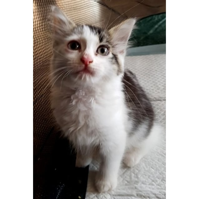 Photo of Delphine **2nd Chance Cat Rescue**