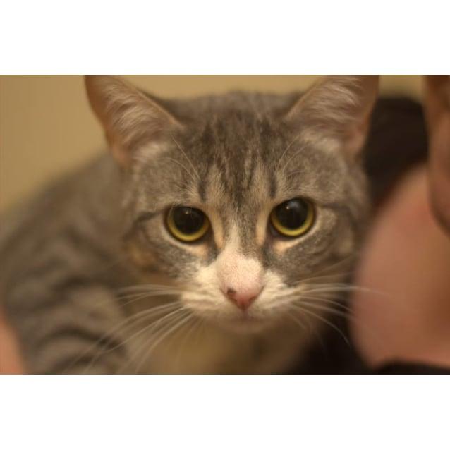 Photo of Suki