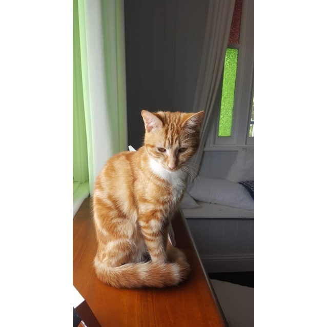 Photo of Marmalade