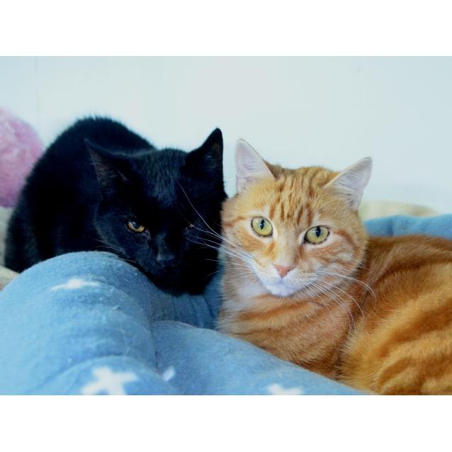 Photo of Tinker & Marmalade