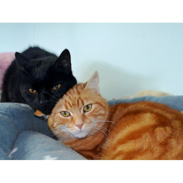 Photo of Tinker & Marmalade