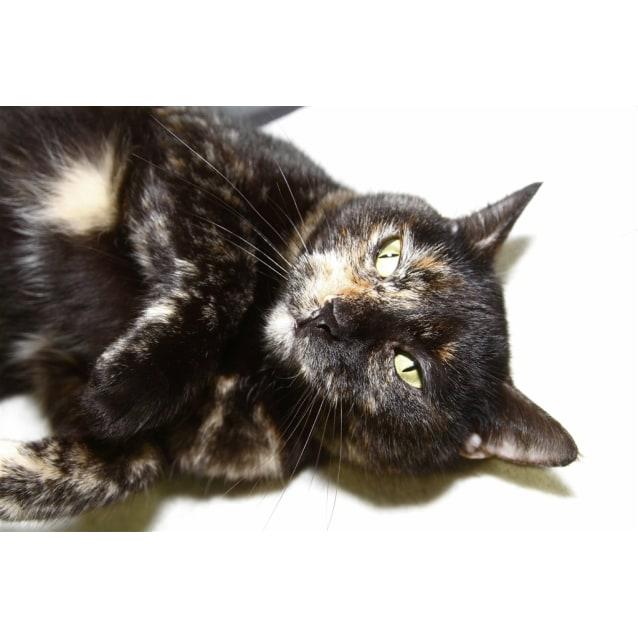Photo of Cleo