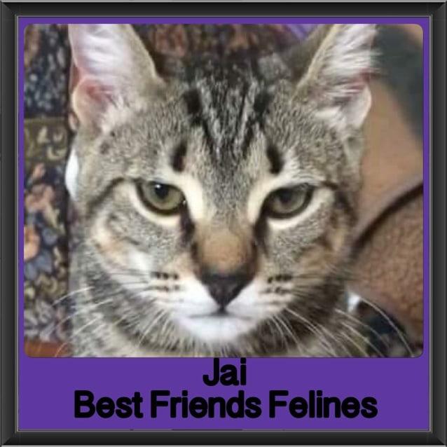 Photo of Jai