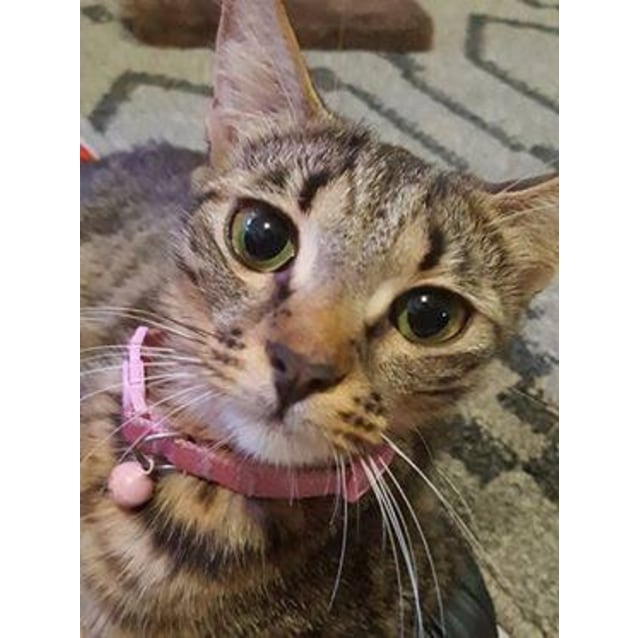 Photo of Avery
