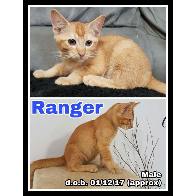 Photo of Ranger